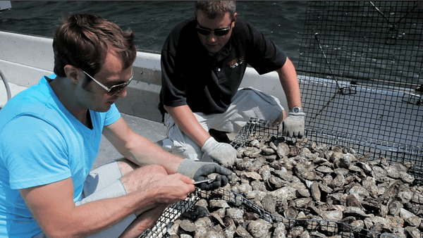 men shucking oysters